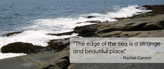 shoreline w text