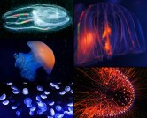 Thanks to research in China, the proteins that make these jellies light up can now make your ice cream glow!